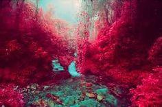 Resultado de imagen para color rosa