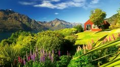 free nature images new zealand - Google Search