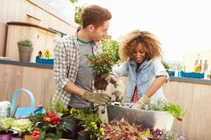 Mixed Race Couple Planting Rooftop Garden Together by monkeybusiness. Mixed Race Couple Planting Rooftop Garden Together Rooftop Garden, Grow Your Own Food, Landscaping Tips, Edible Garden, Growing Flowers, Spring Garden, Garden Planning, Spring Time, Curb Appeal
