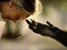 Jane Goodall, photograph by Nick Nichols