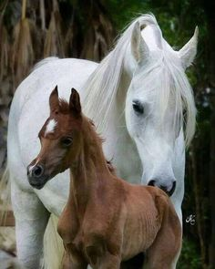 Rules About Horseback Riding For Beginners - FashionActivation : Enjoyable. Basic Rules About Horseback Riding For Beginners - FashionActivation : Enjoyable.,Basic Rules About Horseback Riding For Beginners - FashionActivation : Enjoy. Beautiful Arabian Horses, Majestic Horse, Zebras, Baby Horses, Most Beautiful Animals, Horse World, All The Pretty Horses, Clydesdale, White Horses