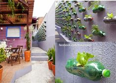 Using the wall for planting.