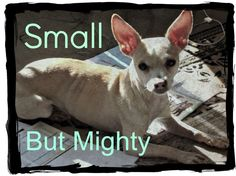 Some big relationship advice from a very small Chihuahua. #divorce #chihuahua See more tips at www.roundandroundrosie.com