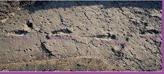 AWAKENING FOR ALL: TANZANIA: Australopithecus Footprints Found !
