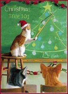 .Christmas cat teach kitty school on tree attack