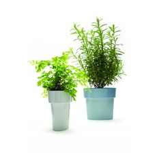 A perfect solution for small plants in tight spaces. No need for under-plate and no annoying puddles after you water Flower Pots, Flowers, Kitchen Store, Small Plants, Home Goods, Planter Pots, Plate, Slim, Spaces