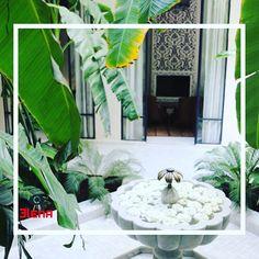 Riad Kheirredine a Marrakech Marrakech, Terrazzo, Plant Leaves, Plants, Blog, Planters, Plant, Planting