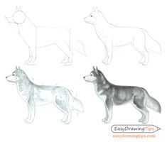 This tutorial explains how to draw a dog from the side view in four steps going from a rough proportions sketch to a pencil shaded drawing. Easy Drawings Sketches, Outline Drawings, Animal Drawings, Pencil Drawings, Drawing Ideas, Dog Face Drawing, Husky Drawing, Drawing Proportions, Shading Drawing