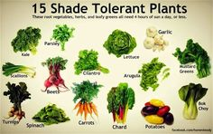 A Minneapolis Homestead: Best Vegetables to Grow in Shade (3-6 hrs of Sun)