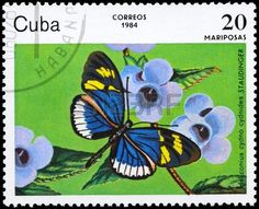 butterflies on postage stamps : CUBA - CIRCA 1984: A Stamp printed in CUBA shows