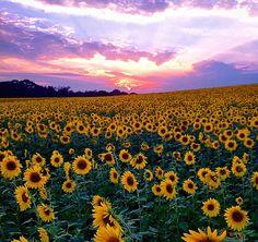 So beautiful!  Hartford County, MD