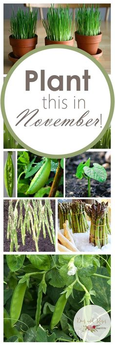 Plant This In November! | Plants for November, Winter Gardening, Winter Gardening Tips and Tricks, Gardening Hacks, Plants to Grow In November, November Gardening, Gardening Hacks
