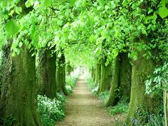 Tree tunnel in Portland, Oregon