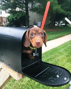 And portable.   21 Reasons Why Dachshunds Are Gifts To The World