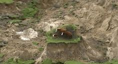 In this image made from video, three cows are stranded on an island of grass in a paddock that had been ripped apart following an earthquake near Kaikoura, New Zealand Monday, Nov. 14, 2016. A powerful earthquake that rocked New Zealand on Monday triggered landslides and a small tsunami, cracked apart roads and homes, but largely spared the country the devastation it saw five years ago when a deadly earthquake struck the same region. (Newshub via AP)  via @AOL_Lifestyle Read more…