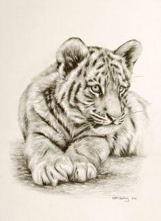 tiger cub drawing - Google Search