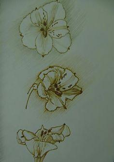Astromelia flowers by Luis Vargas Saavedra Bamboo pen and ink