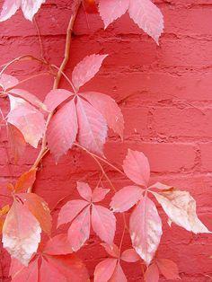 赤と桃色・ピンクの配色や組み合わせ|アイ