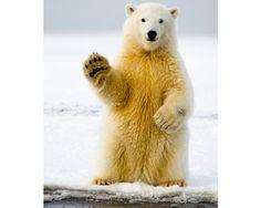 Gestos animales muy humanos. Más fotos aquí: http://www.muyinteresante.es/naturaleza/fotos/gestos-animales-muy-humanos/saluda-a-la-camara #nature #naturaleza