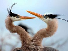 Animalphotos7 in 50 Superb Examples of Animal Photography