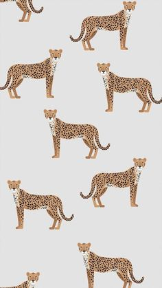 Cheetah Print Wallpaper for Bedroom . Cheetah Print Wallpaper for Bedroom . Illustration Inspiration, Art Et Illustration, Pattern Illustration, Photo Wall Collage, Picture Wall, Of Wallpaper, Iphone Wallpaper, Cheetah Wallpaper, Seagrass Wallpaper