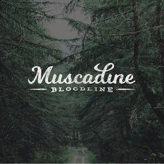 Muscadine Bloodline