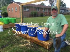 HD How To Grow Sweet Potatoes In Containers (Part 1 of 3) - YouTube