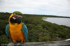The Amazon is home to a quarter of all known land species, making it the most biodiverse place on earth!