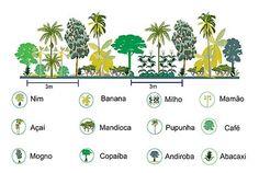Exemplo de agrofloresta