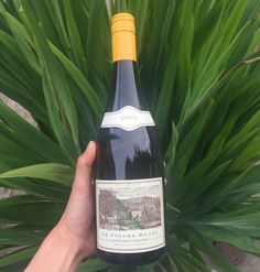 A complete list of what wines to drink in From Around the World in 80 Harvests: a list of the top scoring wines tasted over 2016 in the Americas. Top Wines, Wine Reviews, Award Winner, Wine Tasting, Announcement, Harvest, Vineyard, Champagne, Awards