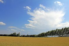 Wheat field by Hiroteru Hirayama on 500px