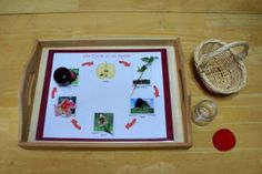 Montessori Apple Themed Activities - Life Cycle of an Apple Matching Activity
