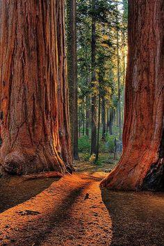 Sequoia National Park, California #TravelDestinationsUsaTop10 #TravelDestinationsUsaNationalParks