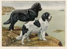 In 1884, a Newfoundland named Jumbo swam for his life in a race across the East River in Harlem, New York.
