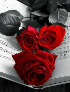 lush red roses,,,color splash,,,