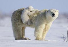 детеныши животных диких и домашних