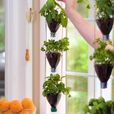 Unusual ways to care for plants! Unusual ways to care for plants!,Kochen und Garten Care for your indoor plants with these hacks! Related posts:Small Backyard Garden Ideas & Tips vegetable garden Small Backyard. Fall Planters, Hanging Planters, Garden Planters, Hanging Baskets, Home Vegetable Garden, Vegetable Planters, Home And Garden, Plantation, Plant Care