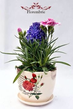 Dianthus and hyacinth #florembrie