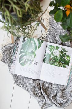 Inside the new Urban Jungle Bloggers book 'Urban Jungle - Living and Styling with Plants' | book review | how to care for your indoor plants | houseplants