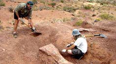 El Notocolossus: Descubrimiento del que podría ser el dinosaurio más grande del mundo | Argentina