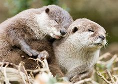 have you ever seen exposing the 'cuteness' factor in the wild animal world.