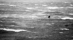 Coup de vent en rade de #Brest en Windsurf http://www.basevitessebrest.com/actualites-voile/164-coup-de-vent-rade-brest.html