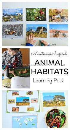 Montessori inspired animal habitats learning materials