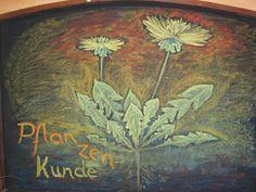 Waldorf ~ 5th grade ~ Botany ~ Dandelion ~ chalkboard drawing