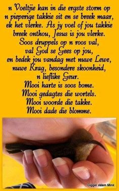 Afrikaans Beautiful Verses, Evening Greetings, Afrikaanse Quotes, Goeie More, Gods Timing, Special Words, Good Morning Wishes, Scripture Verses, Religious Quotes
