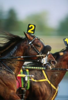 Must go to Hawkinsville GA for Harness racing