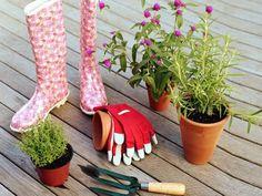 Steckbriefe Für Gemüse Auf Dem Balkon (radieschen, Salat, Bohnen ... Gemuse Im Blumentopf Garten Balkon Tipps