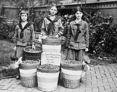 Girl Scouts collecting peach seeds during WWI. The oil from the seed was used for war industries. Undated Photo, Ca 1917-1918
