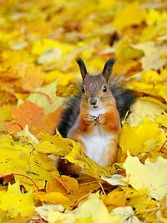 Yellow leaves and squirrel