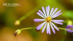 Week 46: Bill Tiepelman just won #picoftheweek46.  Walking with the wildflowers  Find more on www.tsu.co/flowerpictures